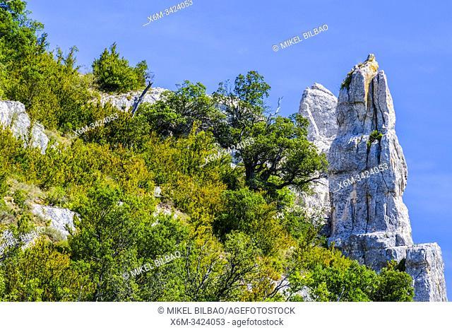 Izki Natural Park. Alava, Basque Country, Spain, Europe