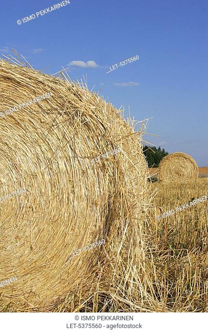 Bales of straw  Liperi, Finland