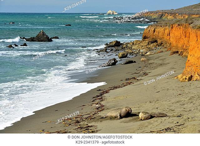 Sand beach and Elephant seal colony, San Simeon, California, USA