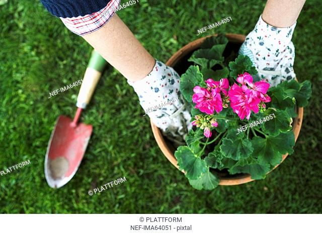 The hands of a woman setting a flower in a pot