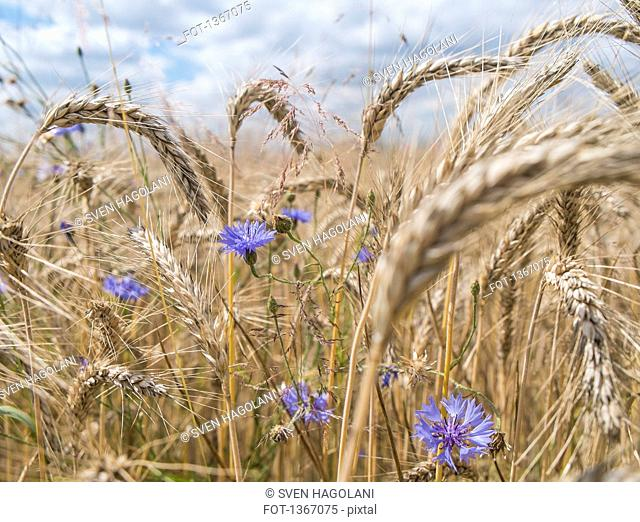 Flowers and crops growing on field