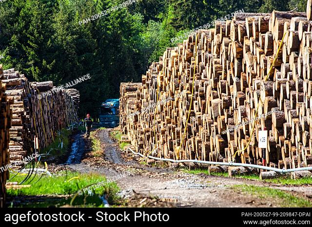 27 May 2020, Baden-Wuerttemberg, Lenzkirch: A forestry worker walks between two stacks of wood in a so-called wet wood warehouse