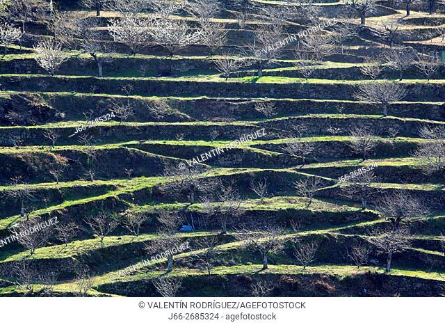 terraces in the Jerte valley. Cáceres