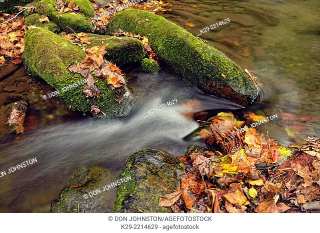 Autumn foliage around Big Creek, Great Smoky Mountains NP, Tennessee, USA