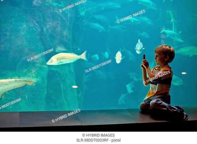 Boy taking pictures of fish in aquarium