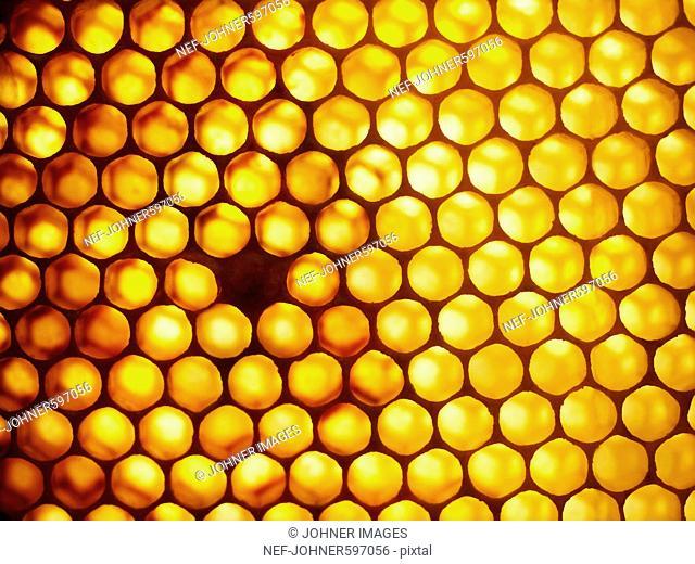 Honeycomb, Sweden