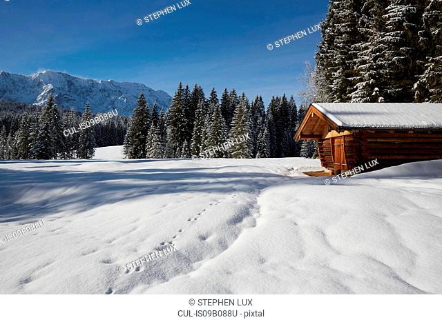 Fir trees and log cabin on snow covered landscape, Elmau, Bavaria, Germany