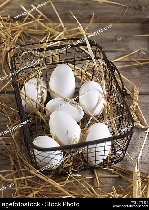 huevos de oca / goose eggs