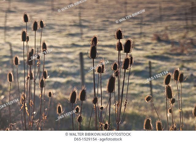 USA, California, Northern California, North Coast, Arcata, farm field, dawn