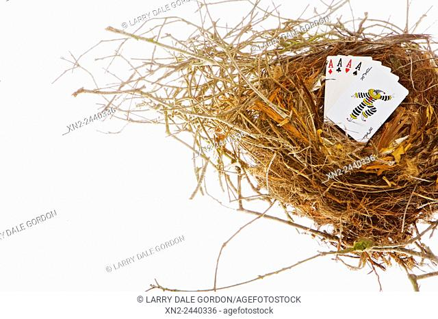 """Metaphor for """"""""Gambling with your Nest Egg"""""""""""