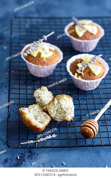 Poppy seed and honey muffins with lemon and lavender flowers