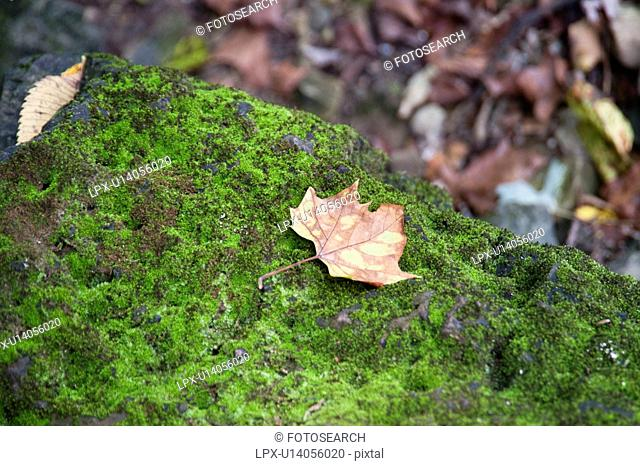 Autumn leaf at lake Taneycomo in Branson, Missouri