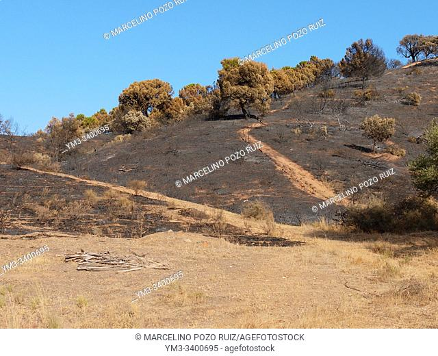 Mount burned by fire charred plants
