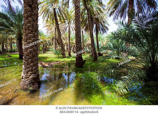 Oman, Al Hamra, palm grove