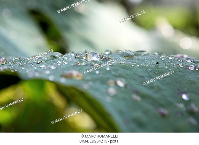 Close up of dew on green leaf
