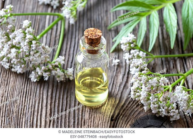 A bottle of essential oil with fresh blooming valerian twigs