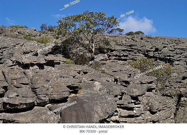 Grampians NP Victoria Australia