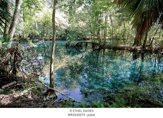 Natural Springs at Silver Springs State Park, where the original Johnny Weismuller Tarzan films were made, Florida, United States of America, North America