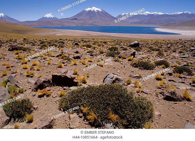 10851664, Chile, San Pedro de Atacama, Miscanti, v