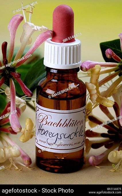 Bottle with Bach Flower Drops, 'Geissblatt' (Lonicera caprifolium), Jelaeger-Jelieber, Jelänger-Jelieber, Bach Flowers, Bach Flower Therapy