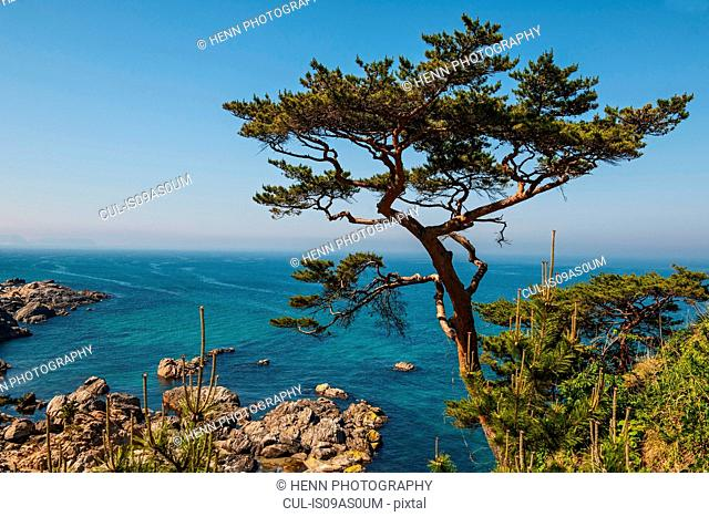 View of tree perched on coastal cliff, Naksansa, Yangyang, Gangwon province, South Korea