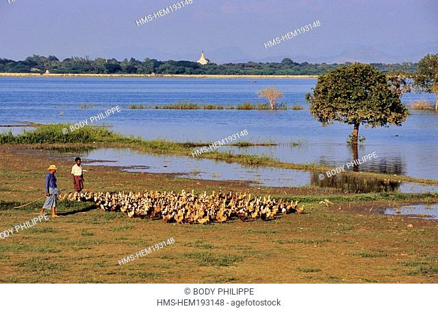 Myanmar Burma, Mandalay Division, Amarapura old city, a breeder and his flock of ducks on Lake U Bein