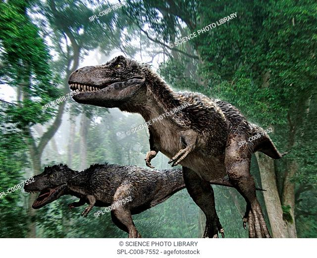 Tyrannosaurus rex dinosaurs. Artwork of a pair of Tyrannosaurus rex dinosaurs hunting prey in a forest. Some theories say that this dinosaur had feathers and...