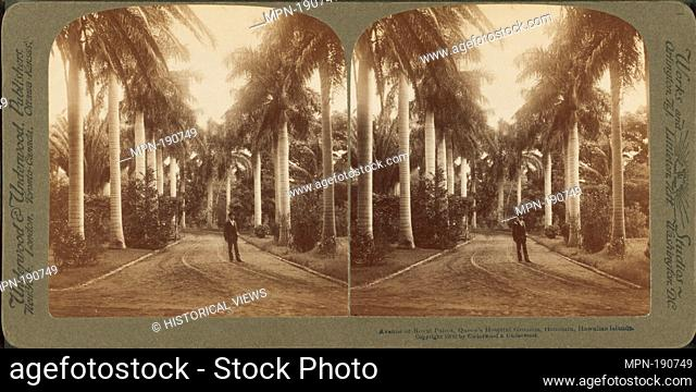 Avenue of Royal Palms, Queen's Hospital grounds, Honolulu, Hawaiian Islands. Underwood & Underwood (Publisher). Robert N