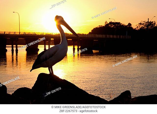 Pelican sunset, Evans Head, NSW, Australia