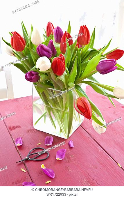 Fresh tulips on red