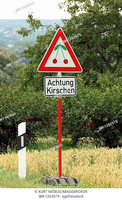 Funny advertising sign in the style of a traffic sign on the roadside, cherries ahead, cherry-growing area of Frauenstein, state capital of Wiesbaden, Hesse