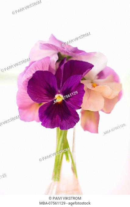 Bouquet of Pansy Flowers, purple color