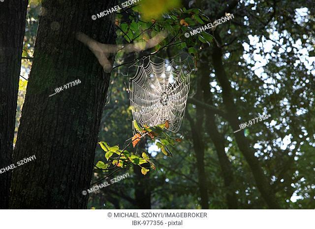 Huge spiderweb on the banks of Meramec River, Missouri, USA