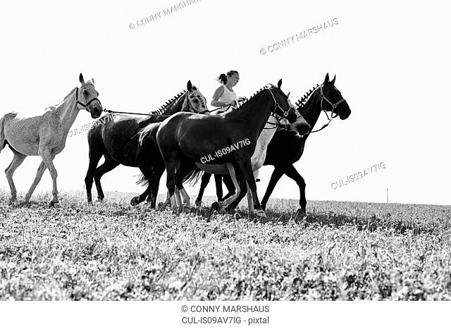 B&W image of woman riding and leading six horses in field