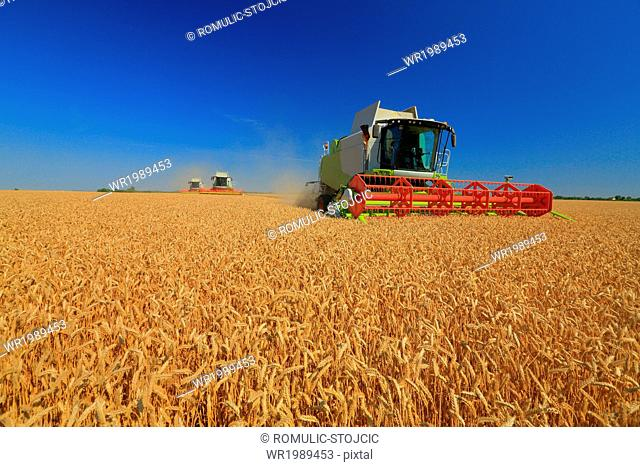 Combine harvesters in field, Slavonia, Croatia