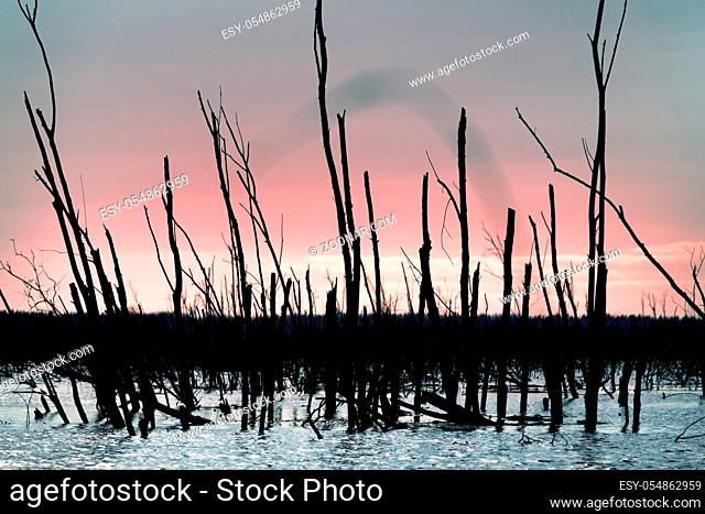 view of dry trunks of trees of the reservoir (after flash flooding, problems in road drainage). Dead forest