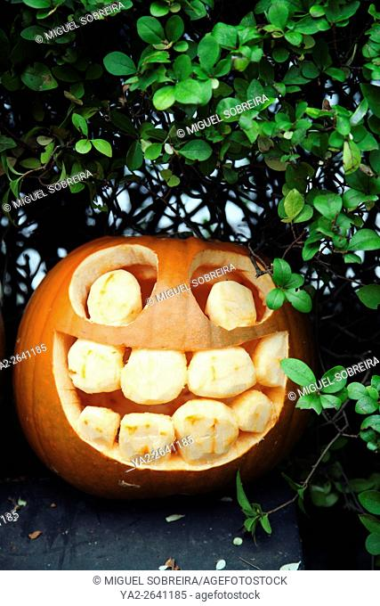 Happy Punmpkin