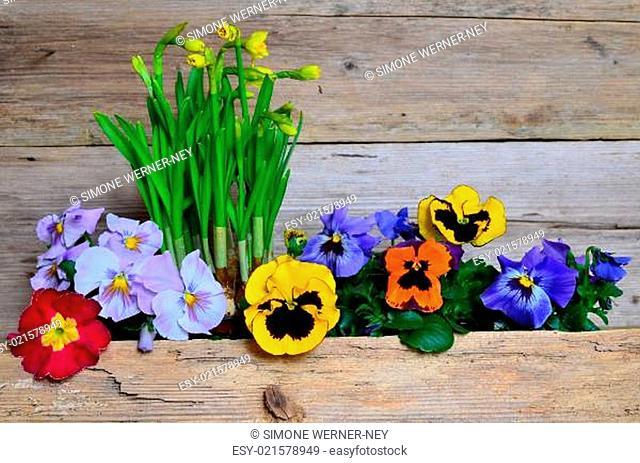 Frühling Blumen Holz Hintergrund