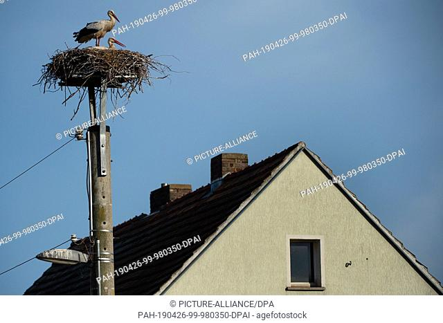 26 April 2019, Brandenburg, Raddusch: A stork couple enjoys the last rays of sunshine of the day. Photo: Lisa Ducret/dpa
