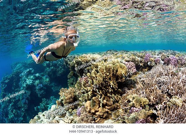 Skin diving, Hardcorals, Hard Coral, Stoney Corals, Stone Corals, Coral, corals, Reef, Reefs, Coralreef, Coralreefs, coral reef, Anthozoans, Anthozoa, Reef Top