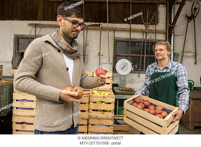 Critical wholesale purchaser buying apples in organic farm, Bavaria, Germany