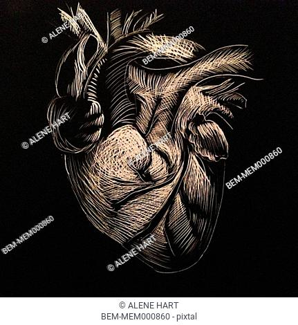 Etched drawing of heart