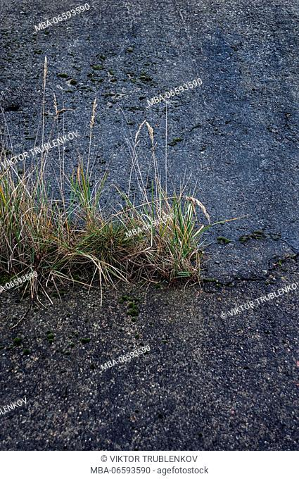 Natural Science, Old cracked concrete, germinated grass