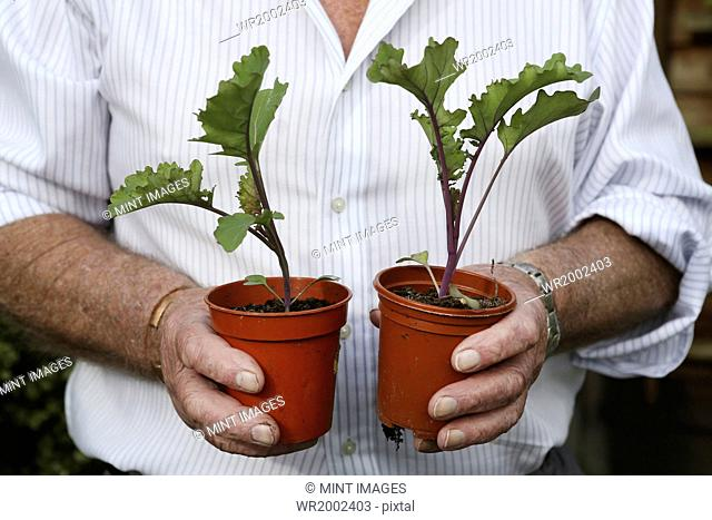 A gardener holding two pots with beetroot plants