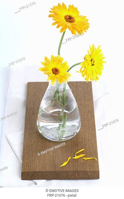 Pot marigold in vase
