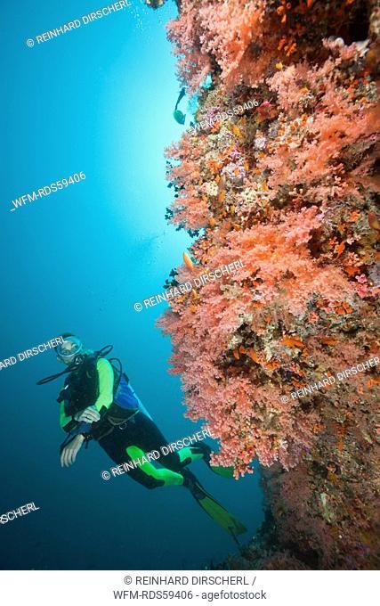Colorfully Coral Reef and Diver, Himendhoo Thila, North Ari Atoll, Maldives