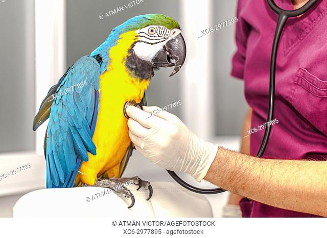 vet doing a clinical examination to a macaw
