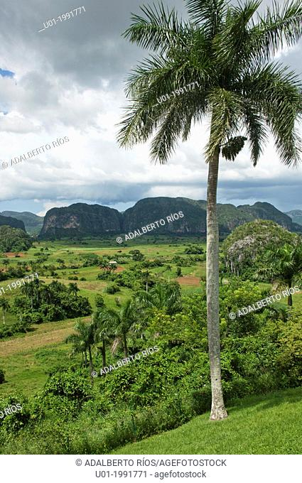The Viñales Valley in Pinar del Rio, with its fields of snuff, hummocks, formations that rise on the horizon, royal palms and snuff curing houses are a...