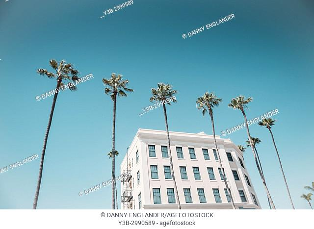 A line of tropical palm trees in front of an old hotel, turquoise sky, in La Jolla, California
