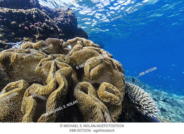 Profusion of hard and soft corals on Tengah Kecil Island, Komodo National Park, Flores Sea, Indonesia